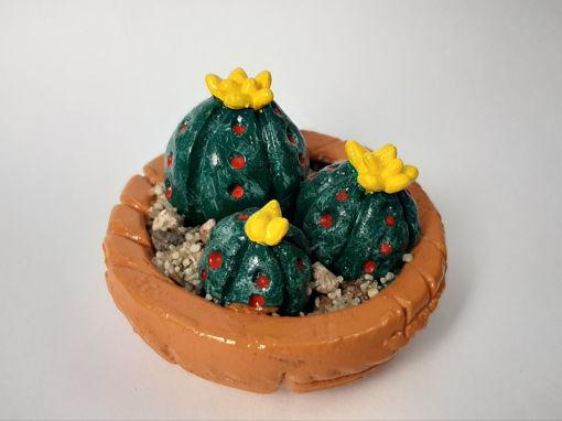 Imagen de Cáctus familia peyotes flor amarilla