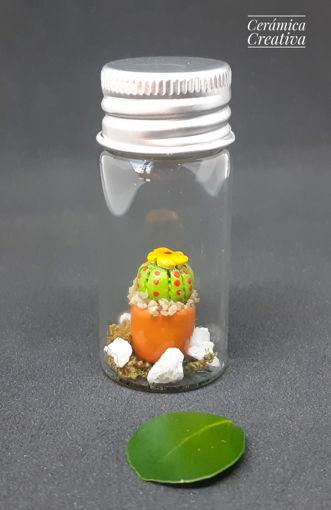 Imagen de Botellita con mini cactus Peyote