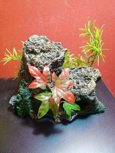 Imagen de Piedra acuática