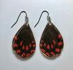 Imagen de Aretes  alas de mariposa Eurytides thymbraeus.
